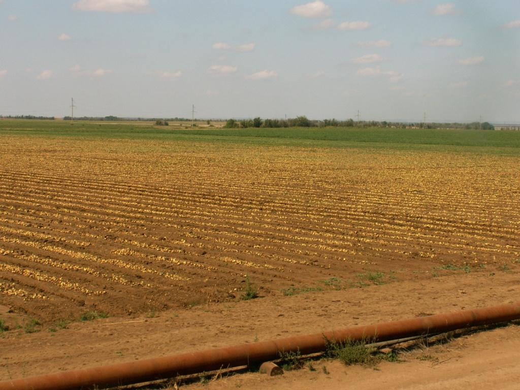 Land на продажу по адресу Россия, Волгоградская область, Городищенский район, Самофаловка